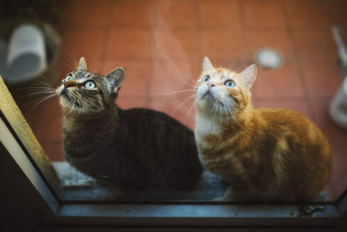 Portrait of two tabby cats waiting behind closed balcony door - RAEF02277