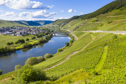 Aerial view of Mosel River amidst land, Trittenheim, Germany - RUNF02926