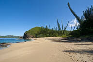 Pine trees growing at beach against blue sky during sunny day, Grande Terre, New Caledonia - RUNF02948