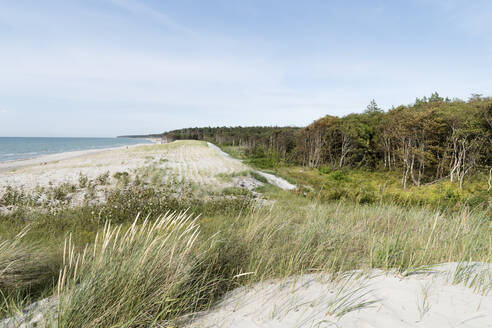 Plants on land at beach against sky during sunny day, Darss, Germany - MYF02136