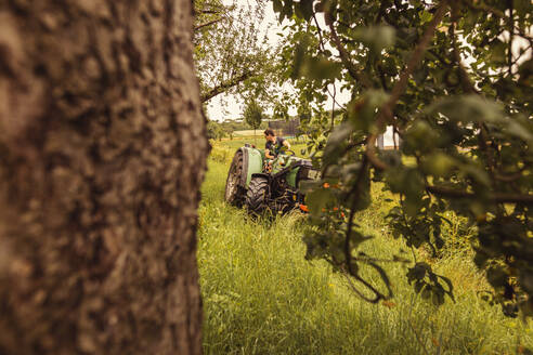 Man on tractor in cherry orchard - SEBF00170