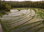 Aerial view of agricultural landscape during sunset, Bali, Indonesia - KNTF03363