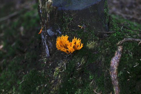 Close-up of orange flower growing on tree trunk in forest at Bavaria, Germany - JTF01285