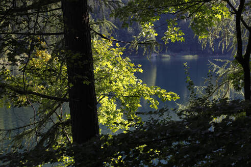 Scenic view of lake Alpsee in forest at Ostallgäu, Germany - JTF01291