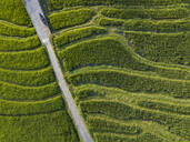 Aerial view of road amidst agricultural field, Bali, Indonesia - KNTF03374