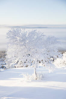 Trees covered in snow - FOLF11035