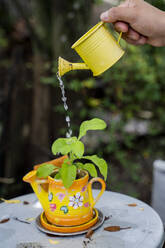 Watering of a plant - AFVF03921