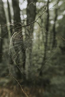 Spider web at a twig - DWF00502