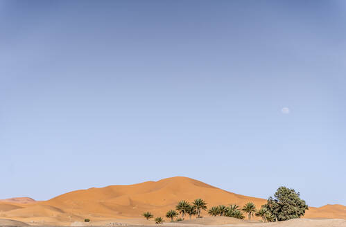 Beautiful landscape of palm trees in the dunes of the desert of Morocco - OCMF00721