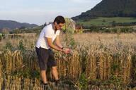 Organic farmer checking harvestability - SEBF00211