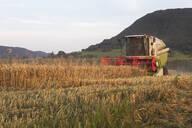 Organic farming, wheat field, harvest, combine harvester in the evening - SEBF00220