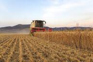 Organic farming, wheat field, harvest, combine harvester in the evening - SEBF00232