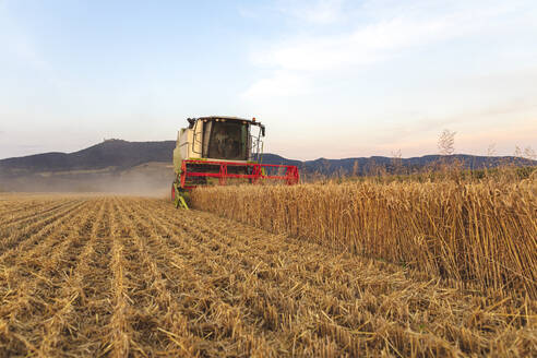 Organic farming, wheat field, harvest, combine harvester in the evening - SEBF00232