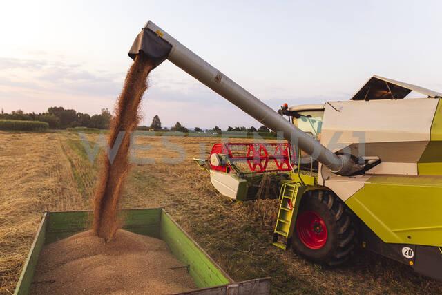 Organic farming, wheat field, harvest, combine harvester in the evening - SEBF00238 - Sebastian Dorn/Westend61