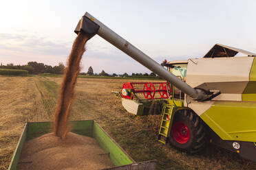 Organic farming, wheat field, harvest, combine harvester in the evening - SEBF00238