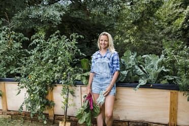 Blond woman harvesting mangold from her raised bed in her own garden - HMEF00520