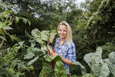 Blond smiling woman harvesting mangold - HMEF00529