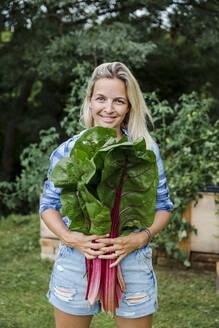 Blond woman harvesting mangold from her raised bed in her own garden - HMEF00538
