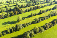 High angle view of Natural monument hedge landscape at Gaissach, Lenggries, Isarwinkel, Upper Bavaria, Bavaria, Germany - SIEF09022