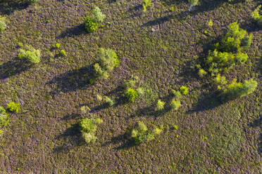 Aerial view of trees on land in forest, Dietramszell, Germany - LHF00699