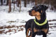 Hunting dog - JOHF00762