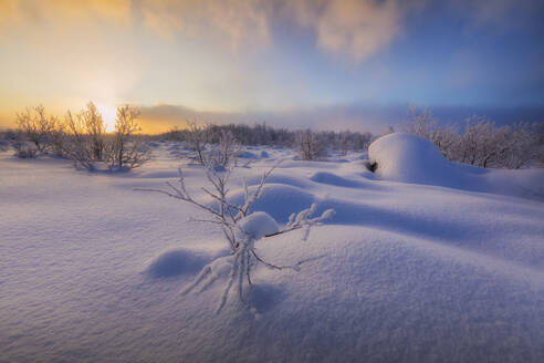 Sunset on the forest covered with snow, Muonio, Lapland, Finland, Europe - RHPLF10996
