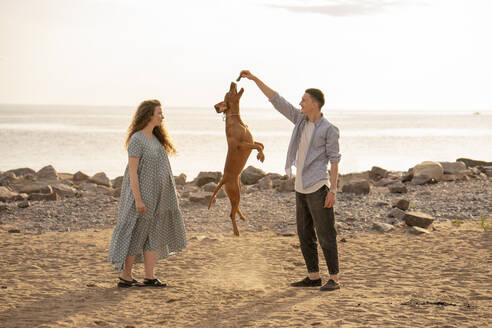 Young couple with dog at the beach, dog jumping - VPIF01520