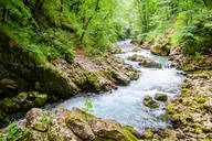 Radovna River flowing through Vintgar Gorge, near Bled, Slovenia, Europe - RHPLF11805