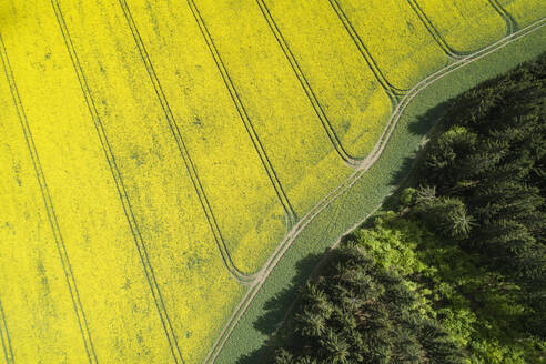 Germany, Thuringia, Schleiz, Aerial view of forest edge and vast rapeseed fields in spring - RUEF02315