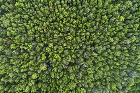Aerial view of forest in early springtime. Mecklenburg-Vorpommern, Mecklenburg Western Pomerania, Germany, Europe. - RUEF02318