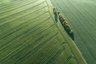 Germany, Mecklenburg-Western Pomerania, Aerial view of dirt road between green vast wheat fields in spring - RUEF02321