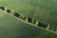 Germany, Mecklenburg-Western Pomerania, Aerial view of dirt road between green vast wheat fields in spring - RUEF02327