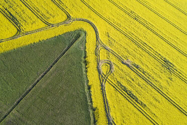 Germany, Mecklenburg-Western Pomerania, Aerial view of wheat and rapeseed fields in spring - RUEF02330