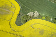 Germany, Mecklenburg-Western Pomerania, Aerial view of wheat and rapeseed fields in spring - RUEF02333