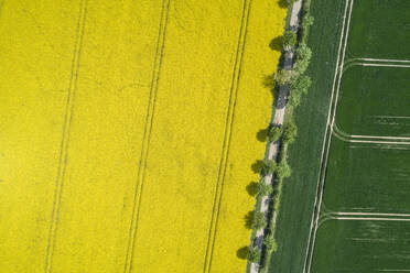 Germany, Mecklenburg-Western Pomerania, Aerial view of treelined dirt road through rapeseed and wheat fields in spring - RUEF02336