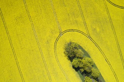 Germany, Mecklenburg-Western Pomerania, Aerial view of vast rapeseed field in spring - RUEF02339