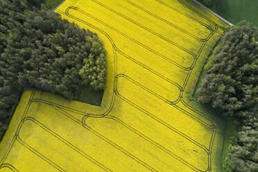 Germany, Bavaria, Aerial view of vast rapeseed field in spring - RUEF02354