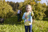 Girl harvesting organic williams pears, showing a pear - SEBF00241
