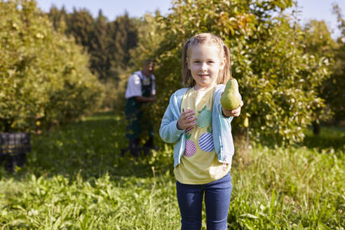 Girl harvesting organic williams pears, showing a pear - SEBF00241