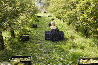 Girl harvesting organic williams pears, sitting on fruit crates - SEBF00268