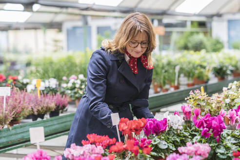 Woman buying flowers in plant nursery - DLTSF00162
