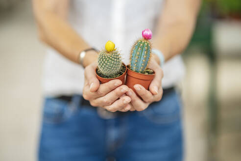 woman hands holding some cactus in plant nursery/SPAIN/ALICANTE/ALICANTE - DLTSF00168