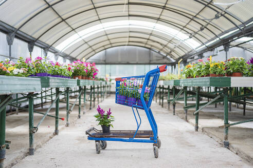 Shopping cart with plants and flowers in plant nursery - DLTSF00174