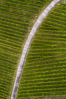 Words written on winding road through vinyards, Germany - STSF02254