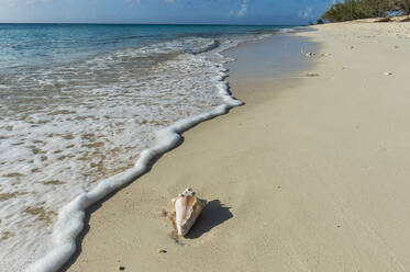 Shell at shore of Norman Saunders beach, Grand Turk, Turks And Caicos Islands - RUNF03236
