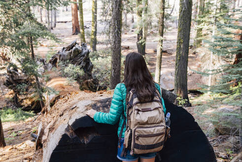 Woman with backpack hiking among the giant trees in the forest in Sequoia National Park, California, USA - GEMF03167