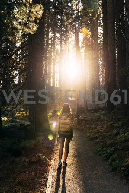 Woman with backpack hiking in the forest at sunset in Sequoia National Park, California, USA - GEMF03170 - Gemma Ferrando/Westend61