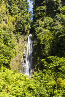 Scenic view of Trafalgar Falls amidst trees at Morne Trois Pitons National Park, Dominica, Caribbean - RUNF03256