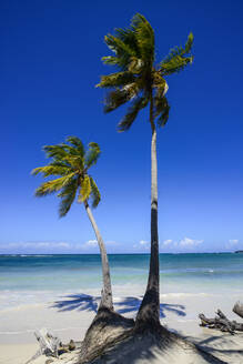 Palm trees at beach against blue sky during sunny day, Playa Grande, Dominican Republic - RUNF03269