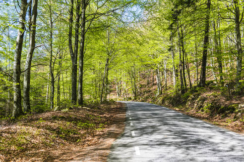 Road through forest - JOHF01735